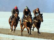 Sail Past (right) working with two stable companions in the snow at Newmarket (Photo - Emma Berry)